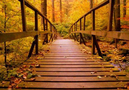 autumn-autumn-leaves-bridge-638481