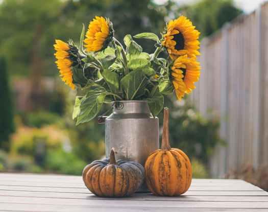sunflowers in churn